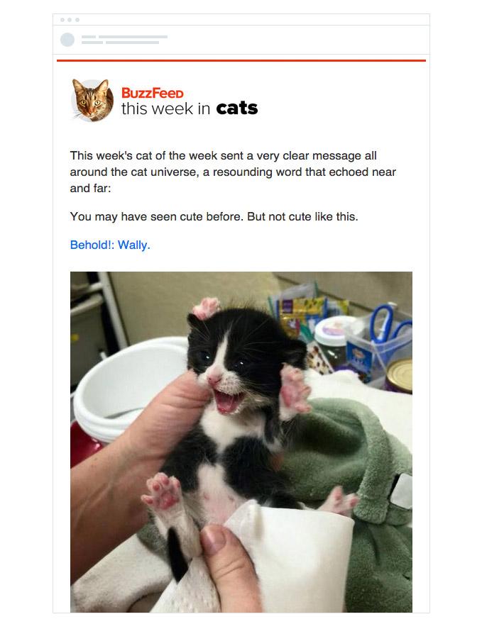 Рассылка «Коты недели» пользуется огромным успехом