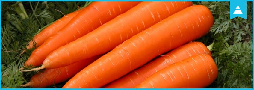 Как Netpeak вырастил «морковку» в Казахстане, или первая кейс-конференция Online Advertising в Алматы.