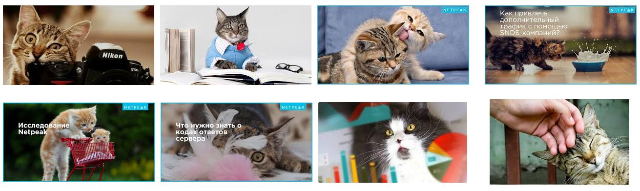 мы точно знаем, что наши читатели любят котиков